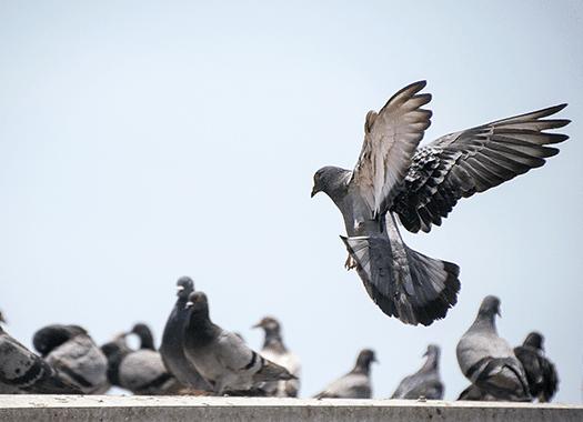pigeons congregating near a business