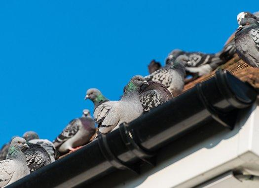 pigeons perched on a roof top