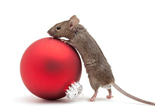 a mouse on a red ornament