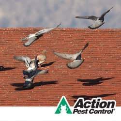 know the warning signs of pest birds in indiana