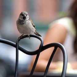 pest bird near business