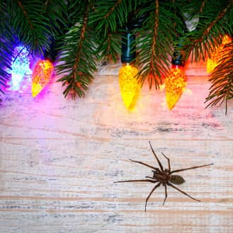 spider found in christmas decorations