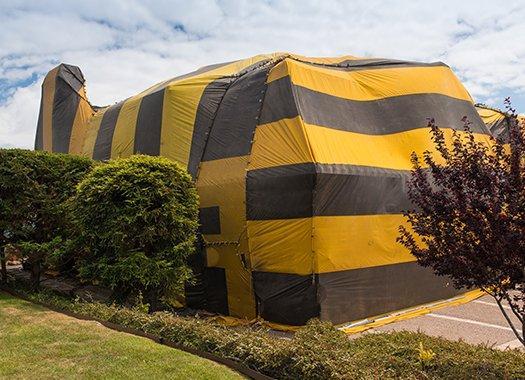 a termite fumigation tent