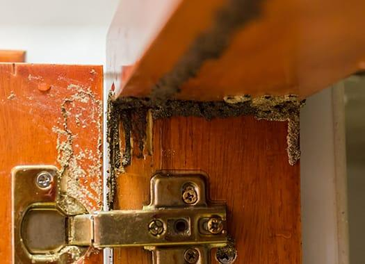 clear signs of termite damage in a louisville kentucky