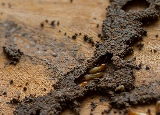 termite damage inside a home