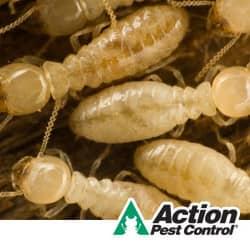Termites In Louisville KY