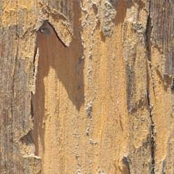 termite damage in lexington home