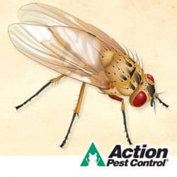 winter pest control can prevent flies in indiana