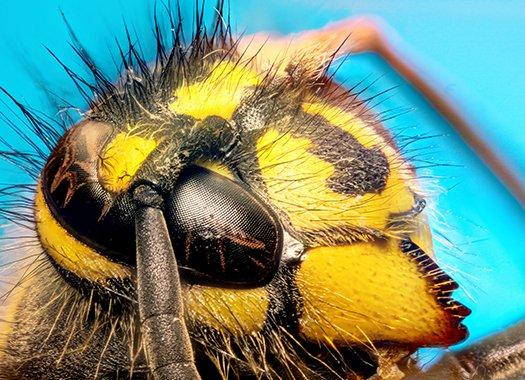 a face of a yellow jacket