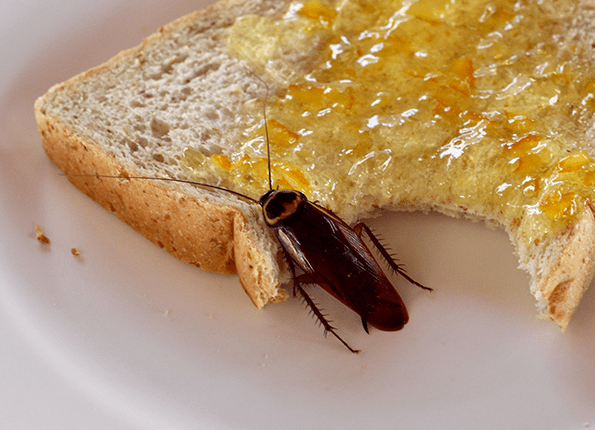 roach eating bread with jelly