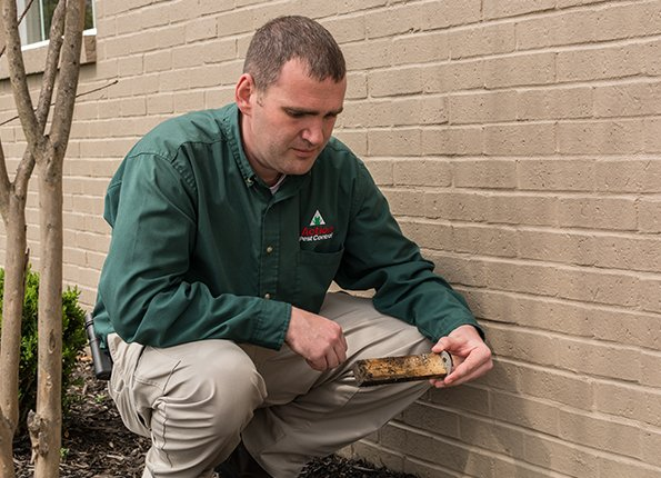 technician inspects a termite bait station