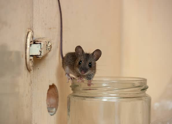 mouse inside indiana home