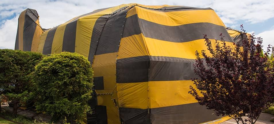 fumigation for businesses