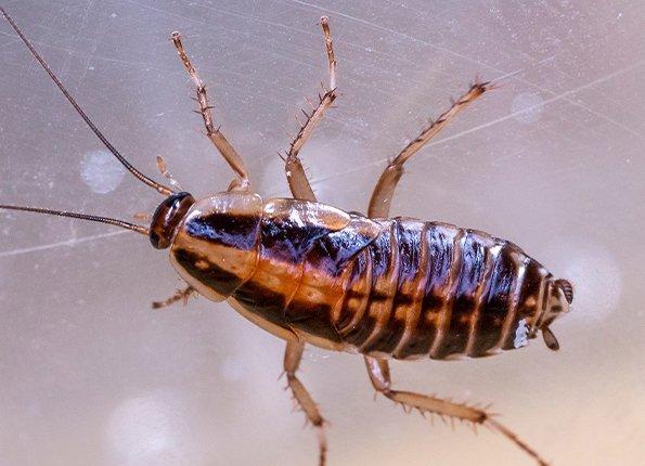 cockroach on microscope