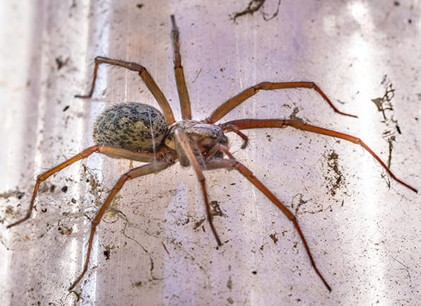 a house spider crawling on a wall in a home in jasper indiana