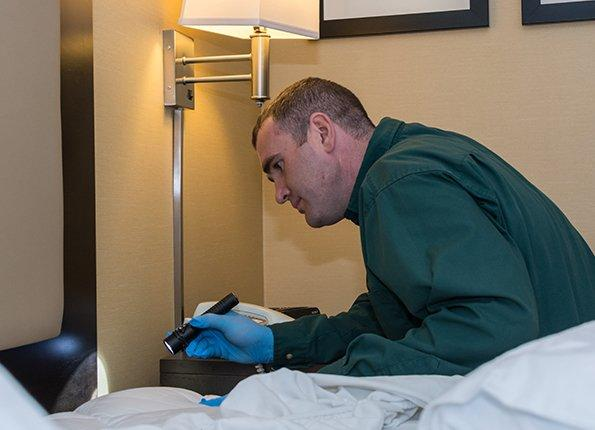 action pest control technician looking for bed bugs