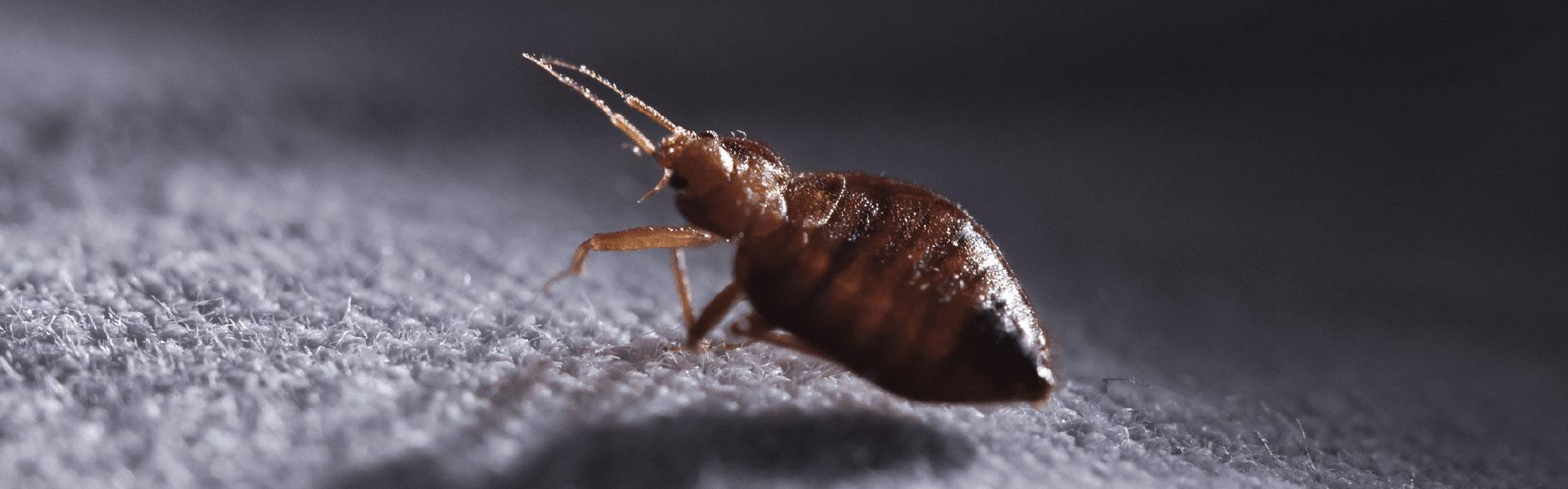Heat kills bed bugs quickly and effectively