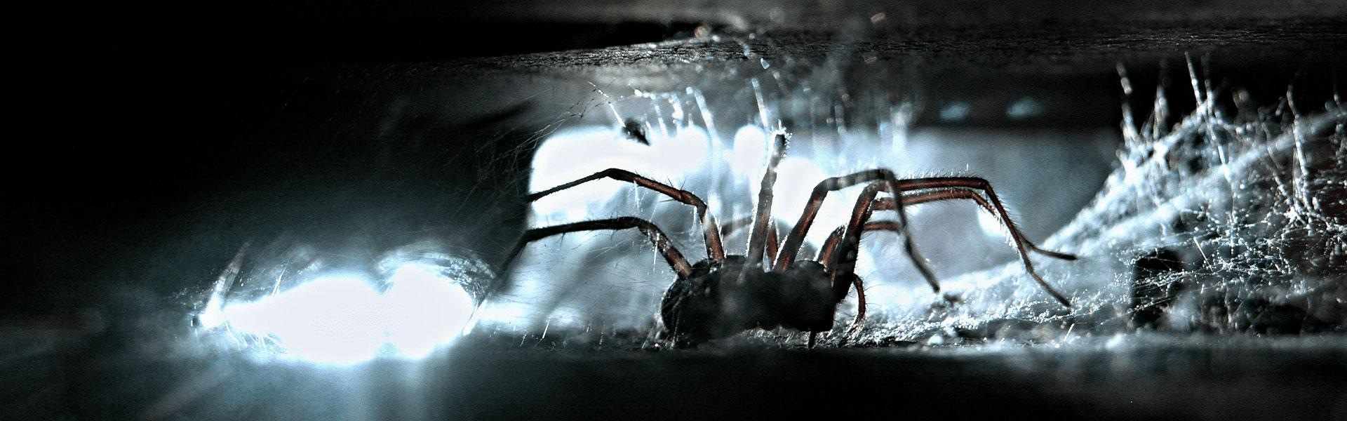 a house spider crawling in web