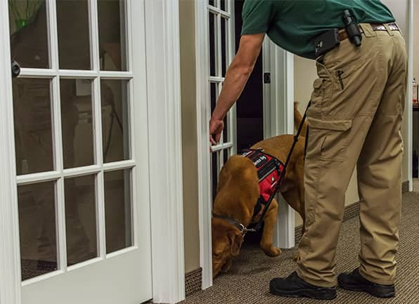 a termite control technician with a trained k9 dog inspecting for bed bugs in a dale indiana home