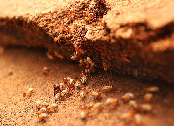 termites outside home in lexington