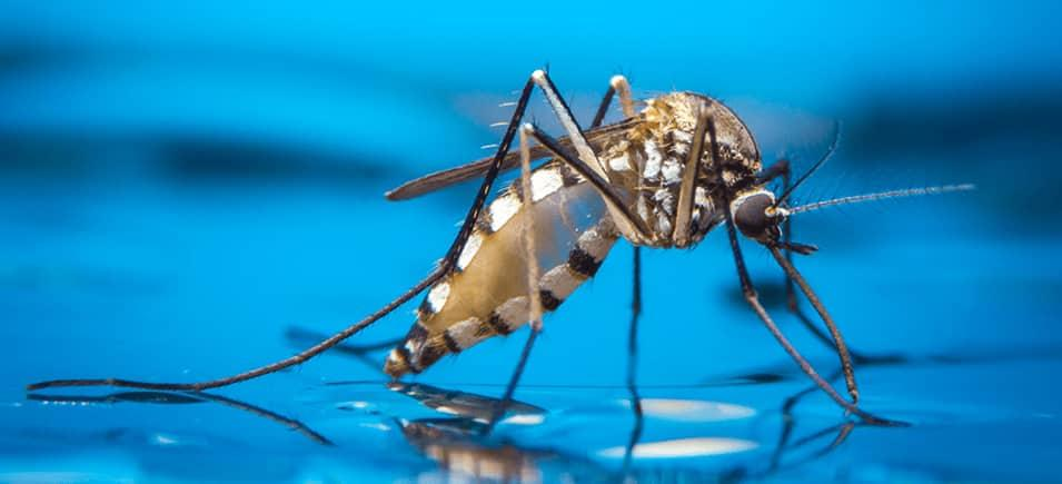 mosquito on reflective surface