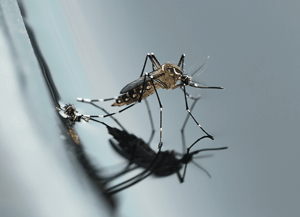mosquito in IN, KY and IL