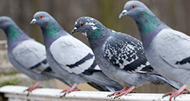 pigeons outside a lexington office building