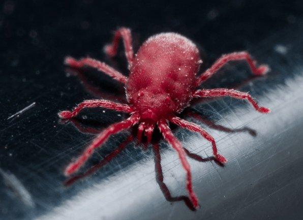 a clover mite crawling inside of a home in boonville indiana