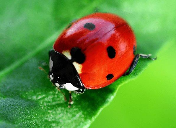 a lady bug on a leaf outside of a home in new palestine indiana
