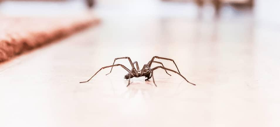small spider crawling across floor inside home