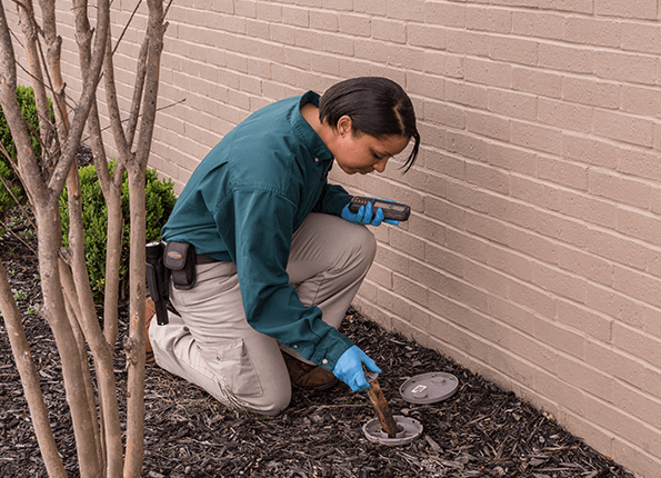 termite technician checking bait station