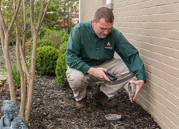 action termite control technician performing inspection