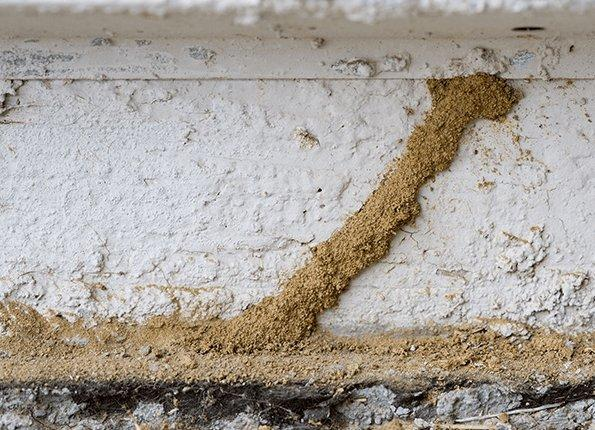 termite mud tubes found on foundation of home