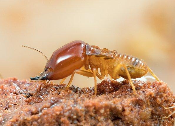 action termite control specialist and homeowner