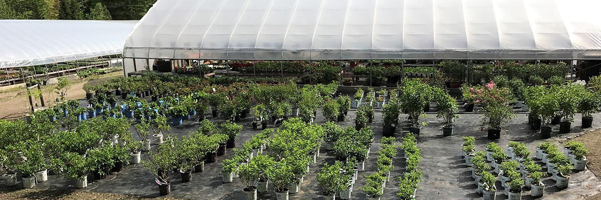 Nursery Trees & Shrubs