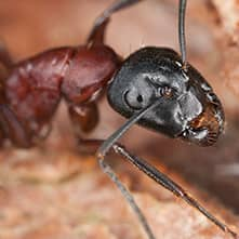 ant looking for food around your home