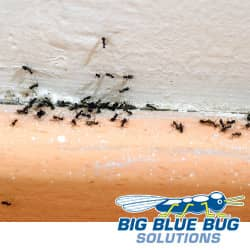 ant infested home in rhode island
