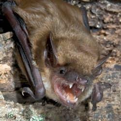 bat found in a home in worcester ma