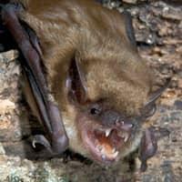 bat up close