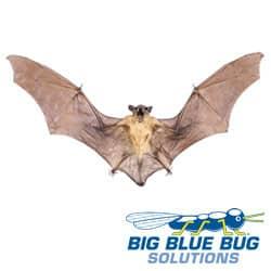 Bat Found In Worcester, MA
