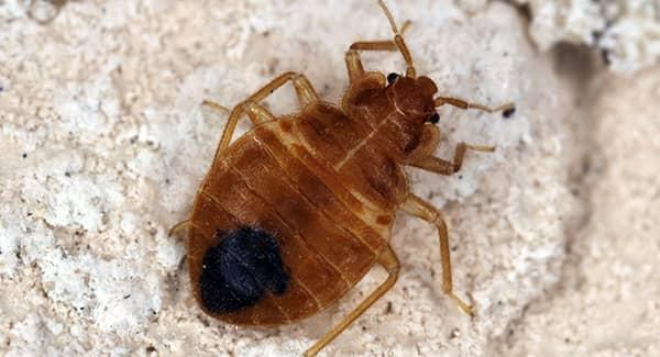 bed bug in rhode island home