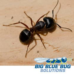 its never too early to think about ant control in rhode island