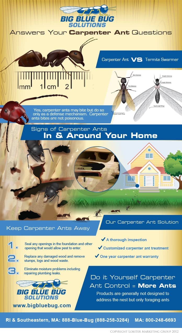 ri carpenter ant information