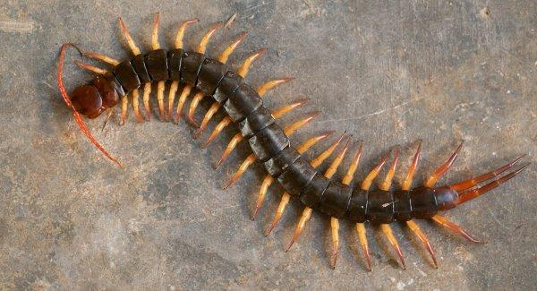 a centipede crawling on a patio