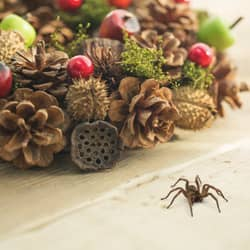 christmas wreath with spider