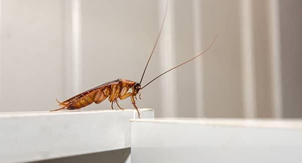 cockroach in worcester kitchen