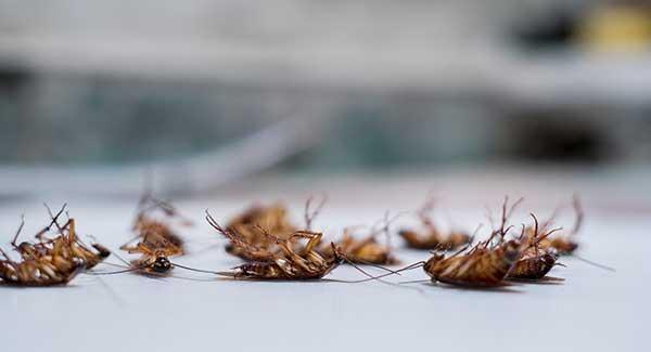 cockroaches in bathroom