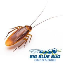 Cockroach Control Framingham MA