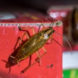cockroach found in pantry