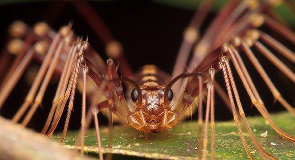 a centipede on a leaf